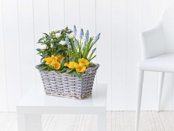 Sedny Skies Basket Plantado