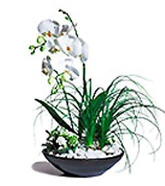 Trendy Arrngmnt of Plants