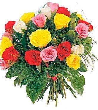 Roses in various colors