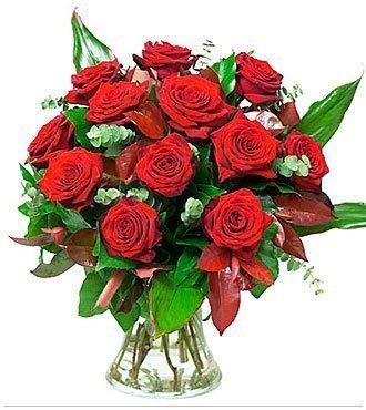 Roses Red Velvet No Vase