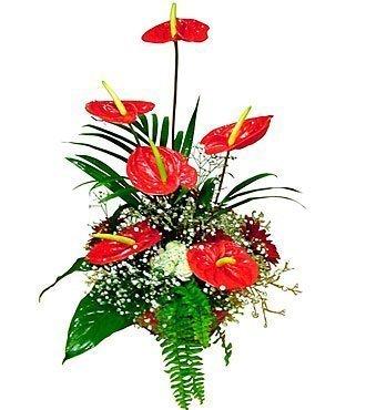 Arrangement of Cut Flower