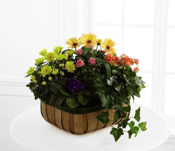 Flores de Consuelo