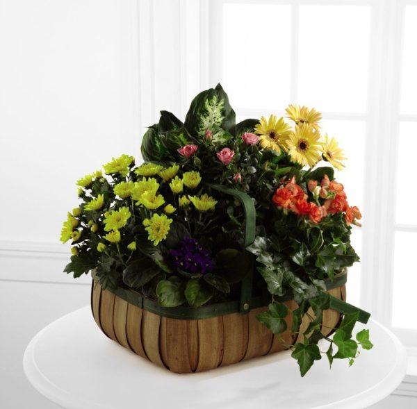 Flores de Consuelo - Deluxe