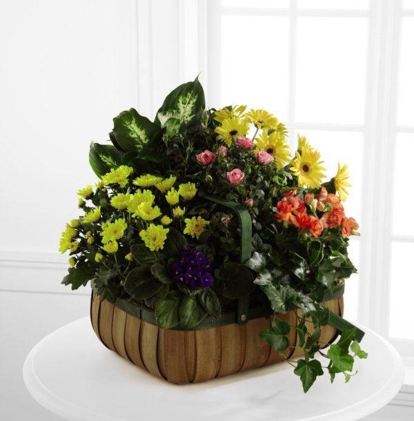 Flores de Consuelo - Premium